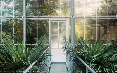 Clear Edge Glass sunrooms: perfect for pets and plants